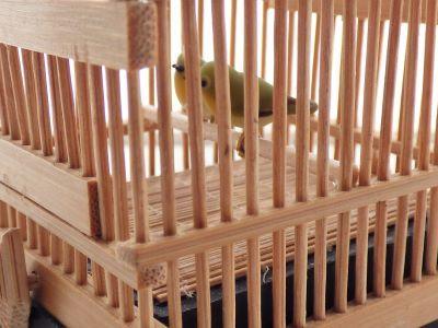 20190701竹籠メジロ2