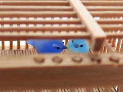 20190701竹籠ルリビタキ2