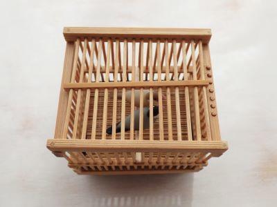 20190701竹籠文鳥1