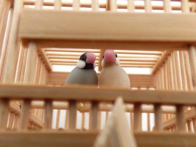 20190701竹籠文鳥3
