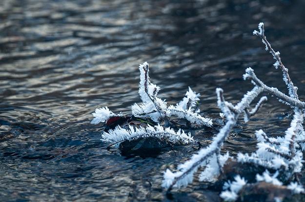 霜の花咲く