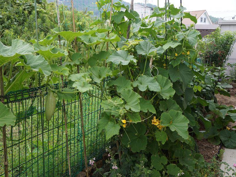 ガーデンの野菜