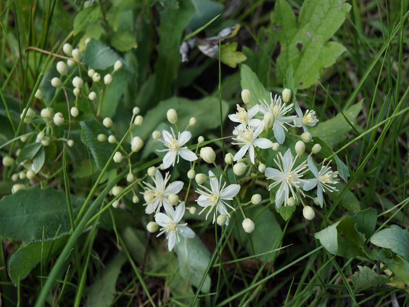 駒ケ根の花