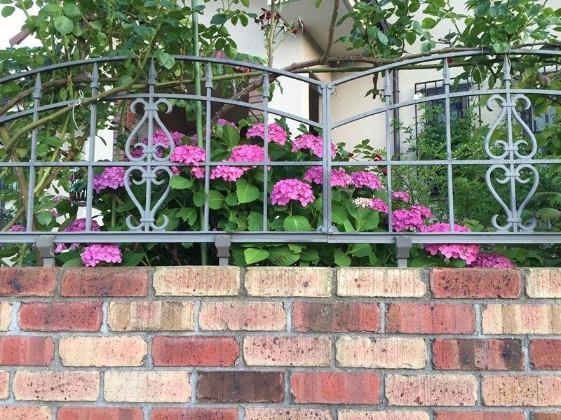 庭の紫陽花庭の