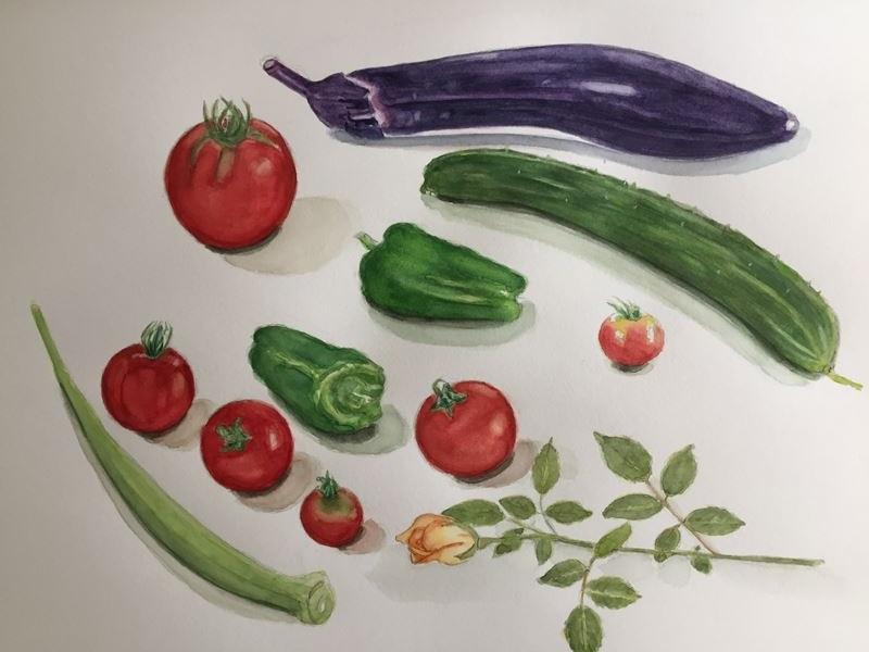 夏野菜の水彩画