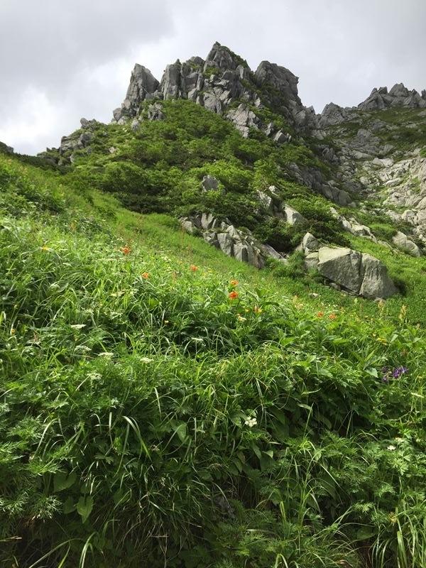 千畳敷カールの花