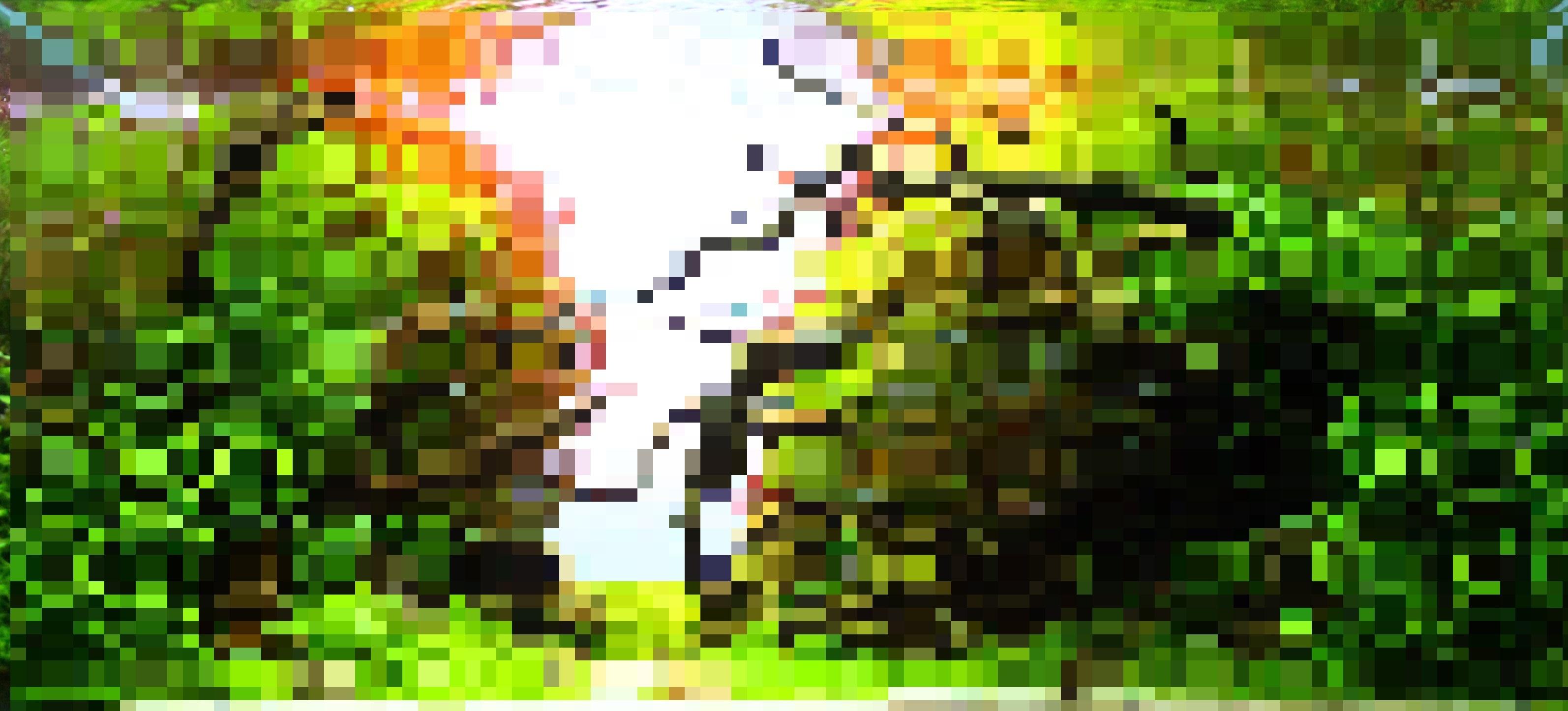 IAPLC2019_トリミング_モザイク190806