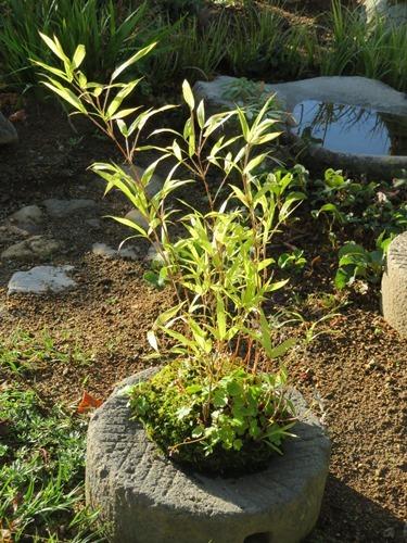 草もの盆栽