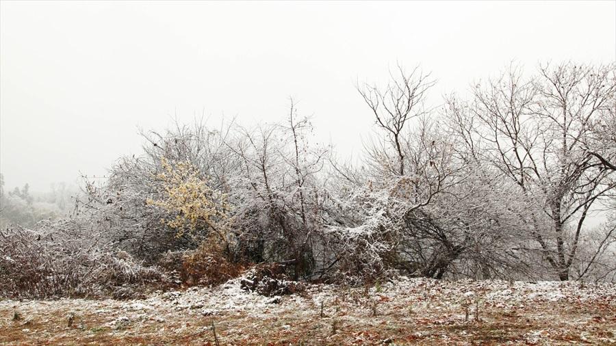 2020.1 初雪