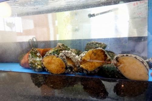 日本料理 すし兆駒 よしこま 202001 (18)