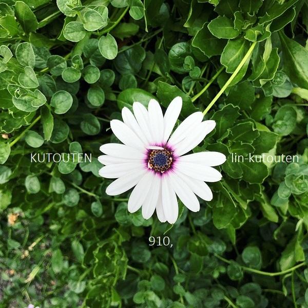 20190805-whiteflower-600size.jpg