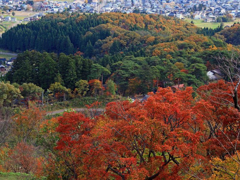 春日山の紅葉