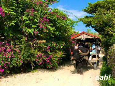 竹富島といえば水牛車観光。