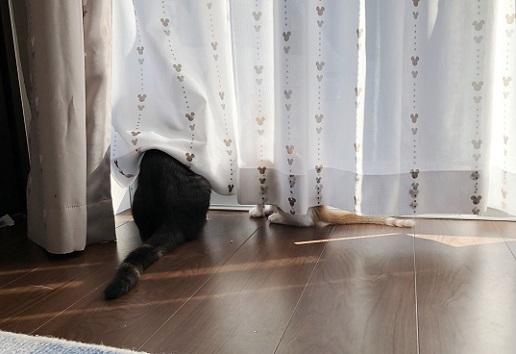 チュータ・グレース