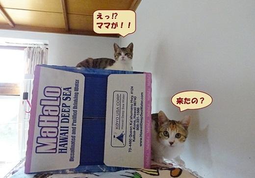 ビジュ・カーロ2