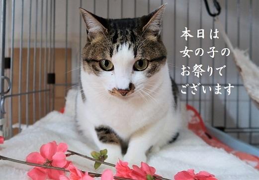 キッシー (1)