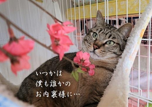きじ丸 (1)