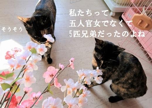 サピピ&サロエ (1)