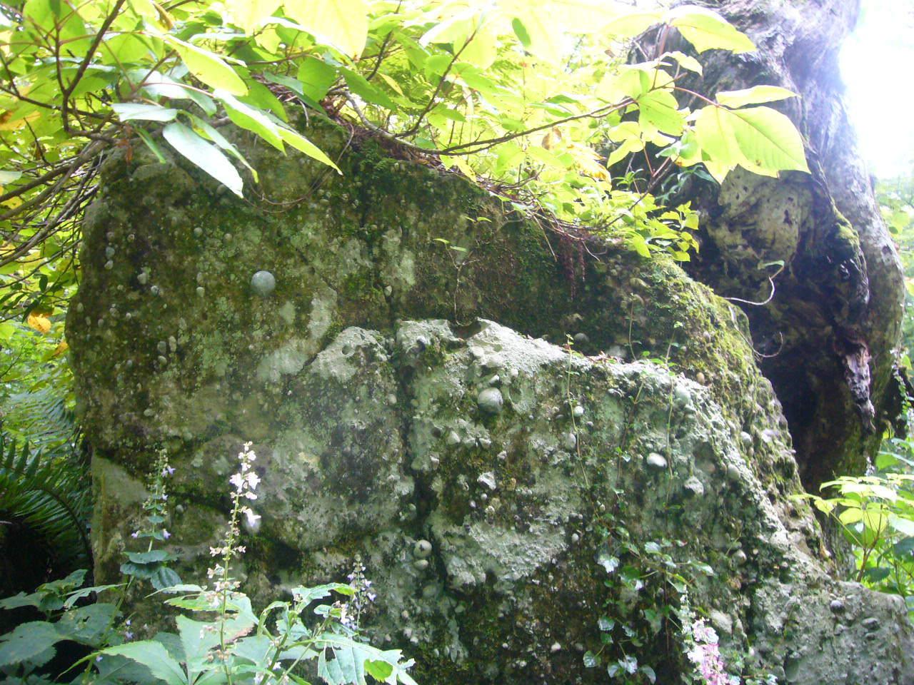 サザレ岩 別山麓 H22.9.24
