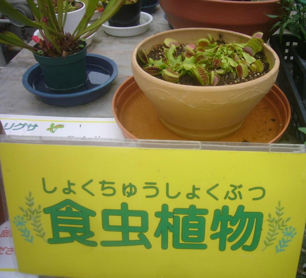 食虫植物 R1.12.12