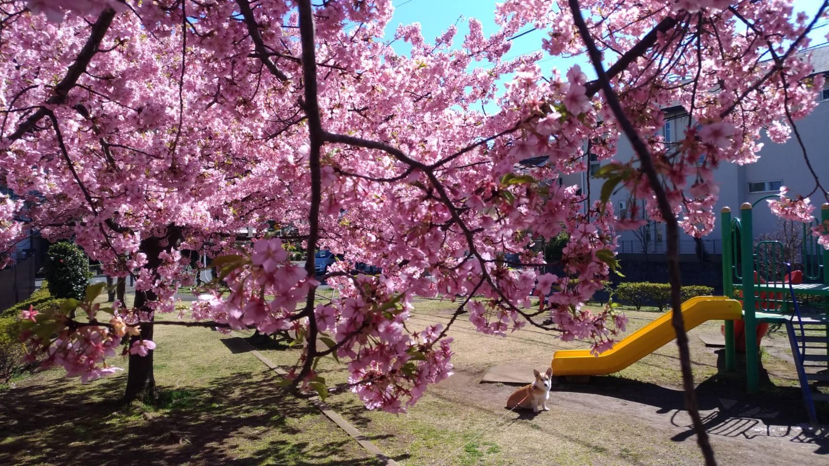 20200306笹塚公園7