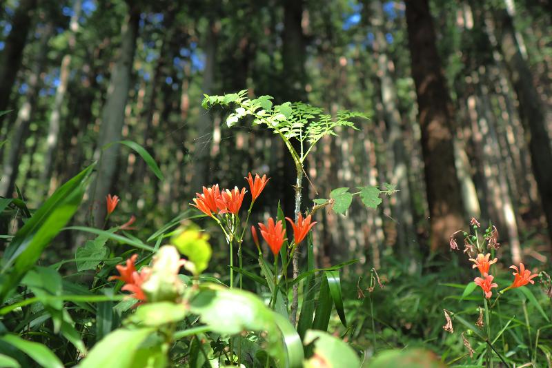 kitsunenokamisori012.jpg