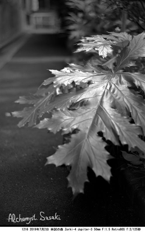 林試の森1216-3