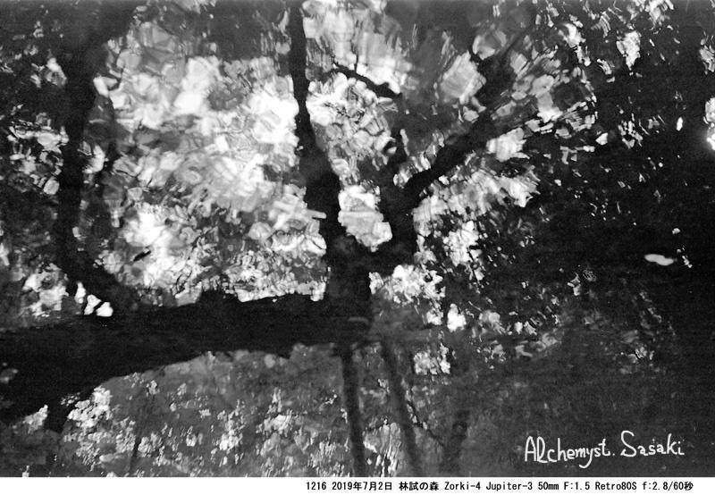 林試の森1216-9