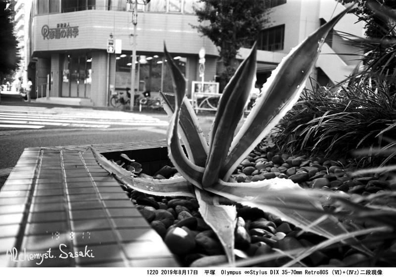 奇妙な植物1220-8