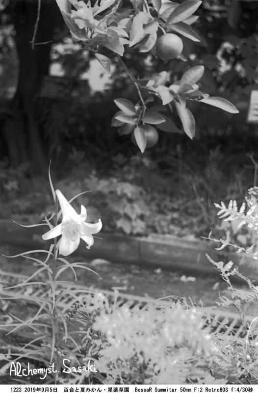 星薬草園1223-39
