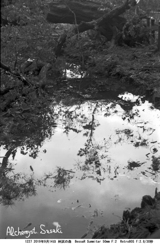 林試の森1227-5