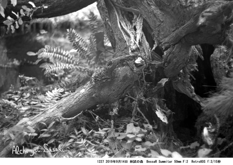 林試の森1227-7