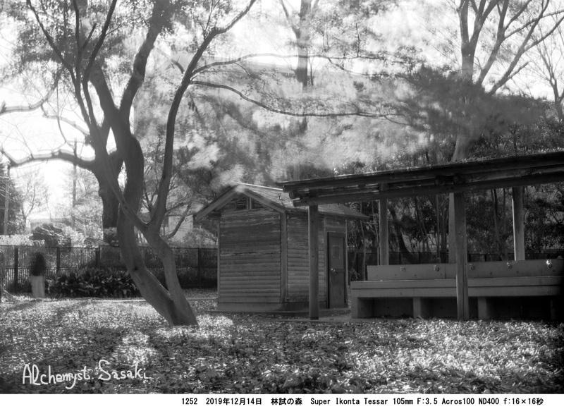 林試の森1252-12