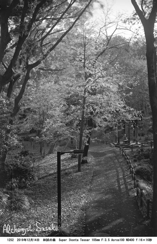 林試の森1252-13