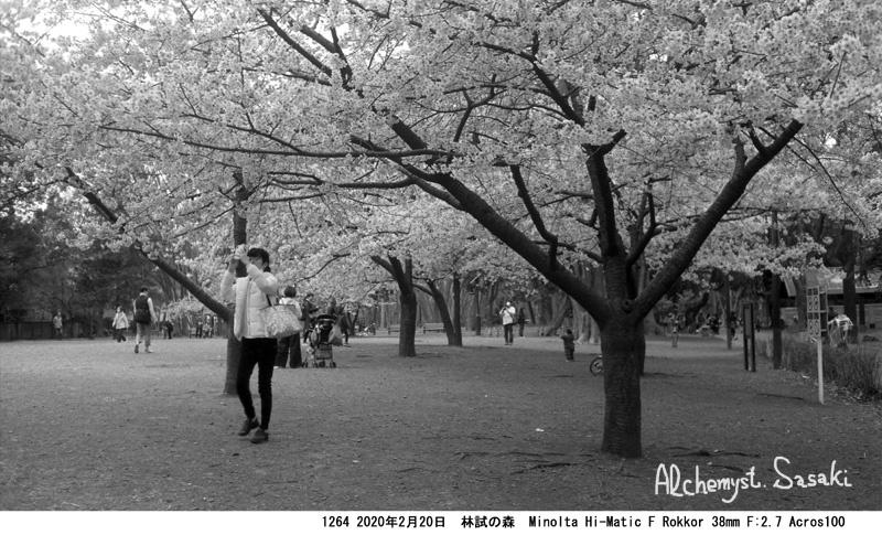 林試の森の桜1264-26
