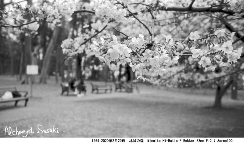 林試の森の桜1264-28