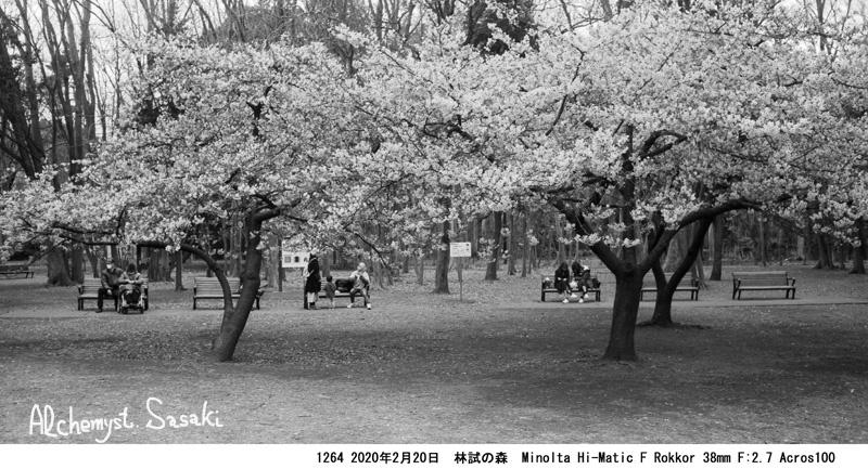 林試の森の桜1264-30