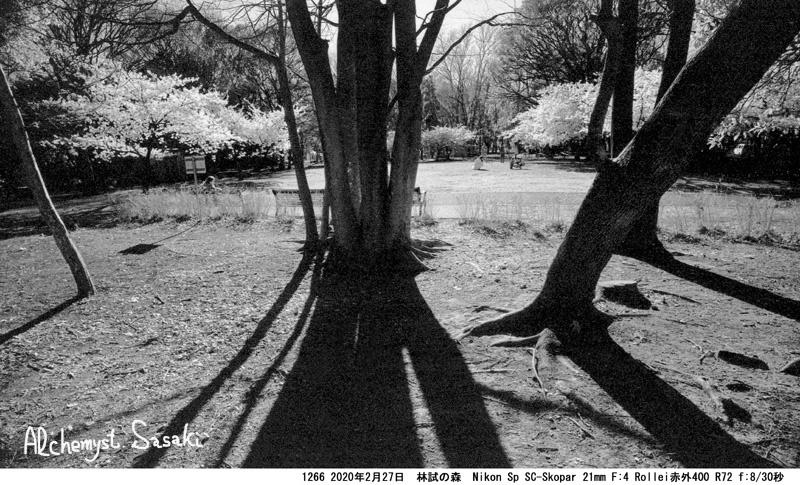 桜 1266-23
