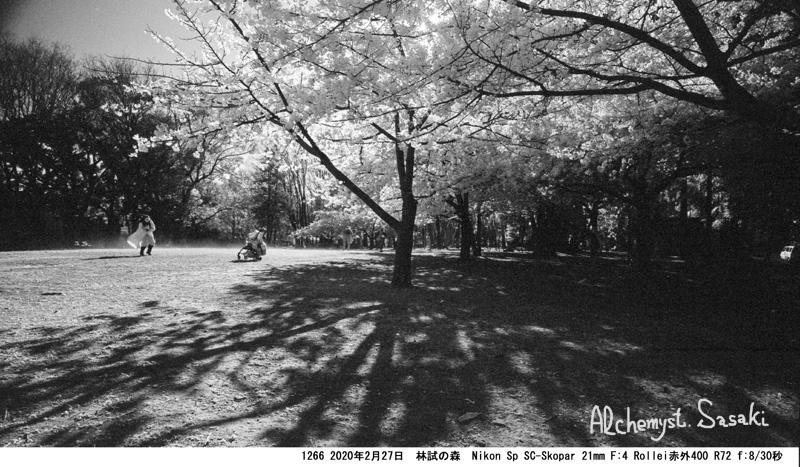 桜 1266-25
