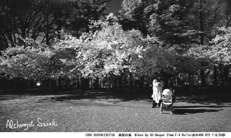 桜 1266-26