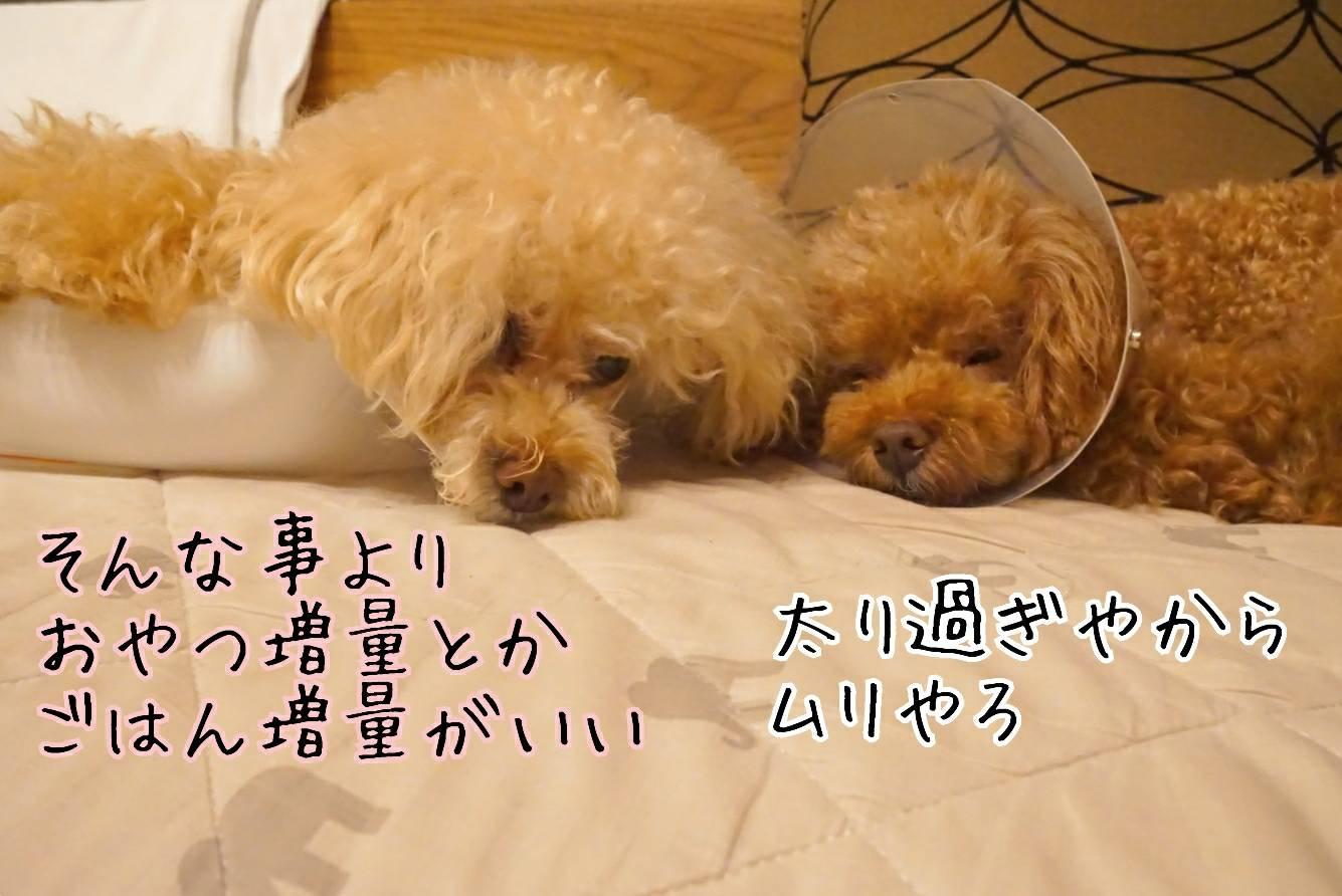2019七夕14