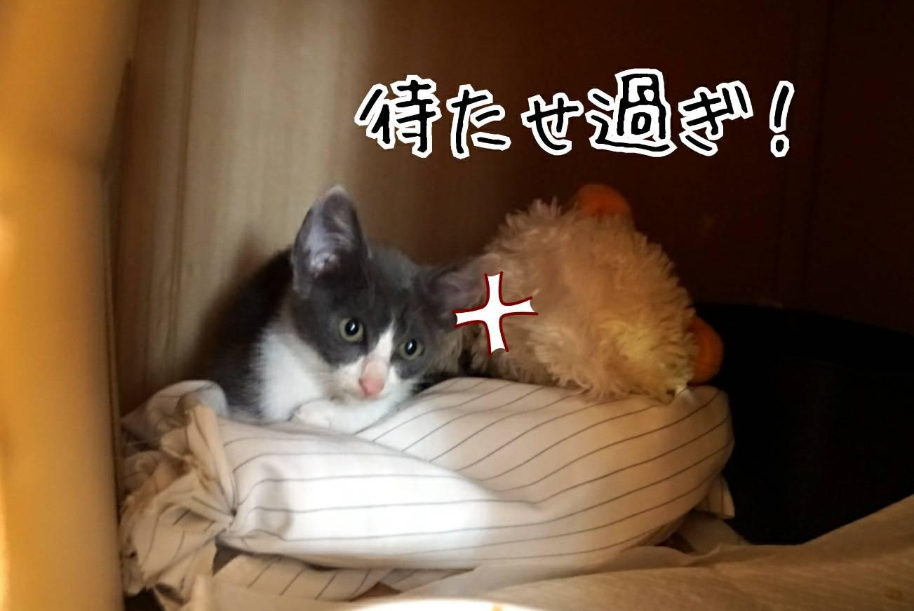 2019富山帰省17