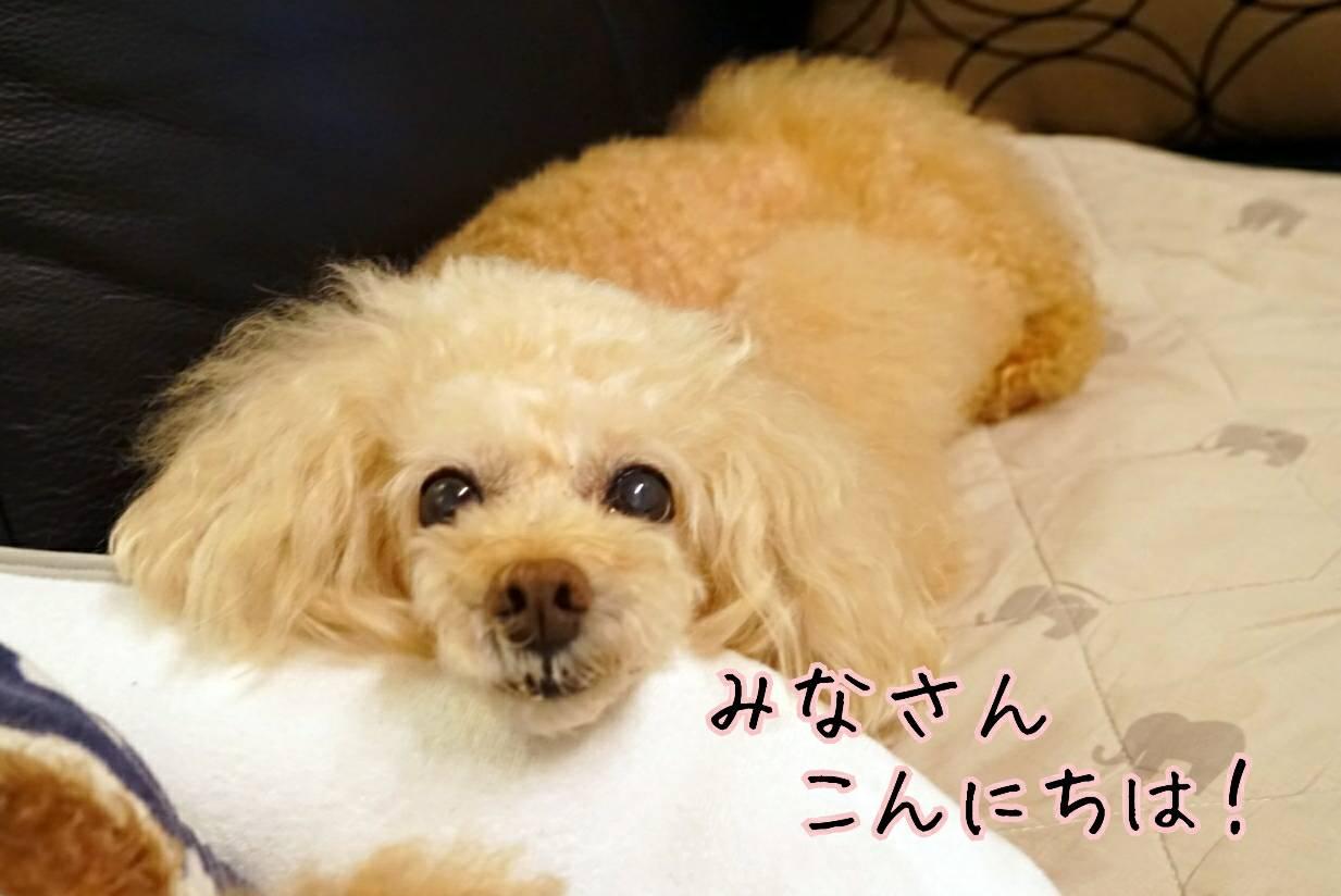 犬猫ブログ宣言11
