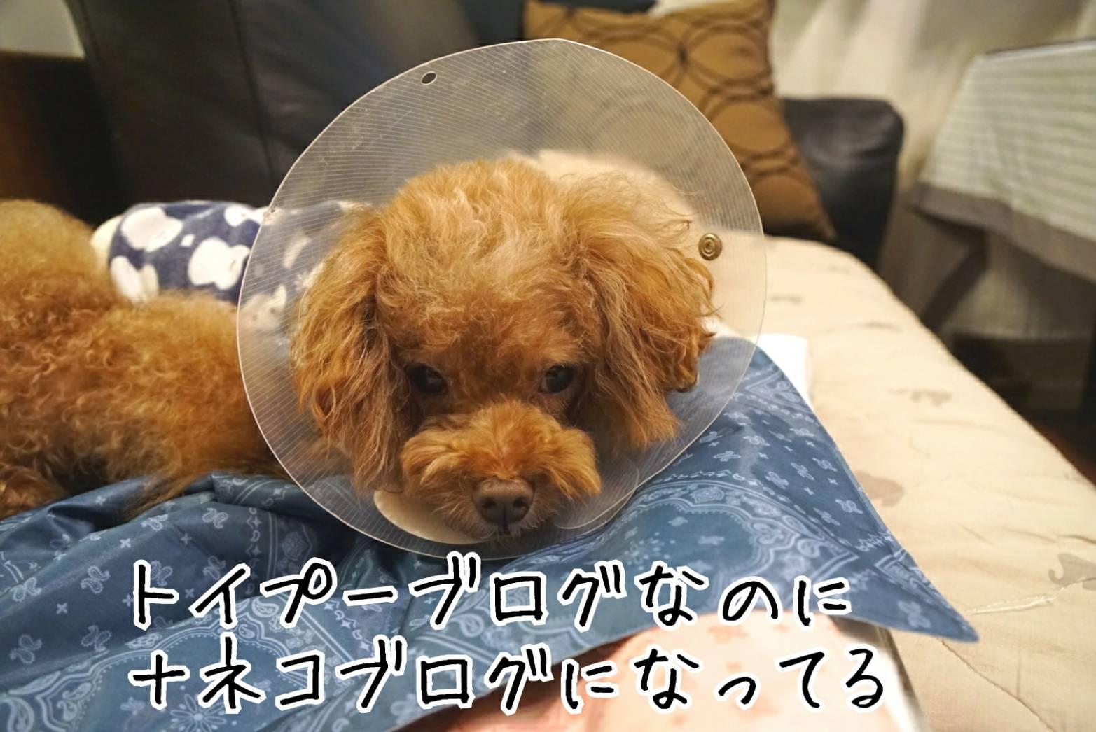 犬猫ブログ宣言12