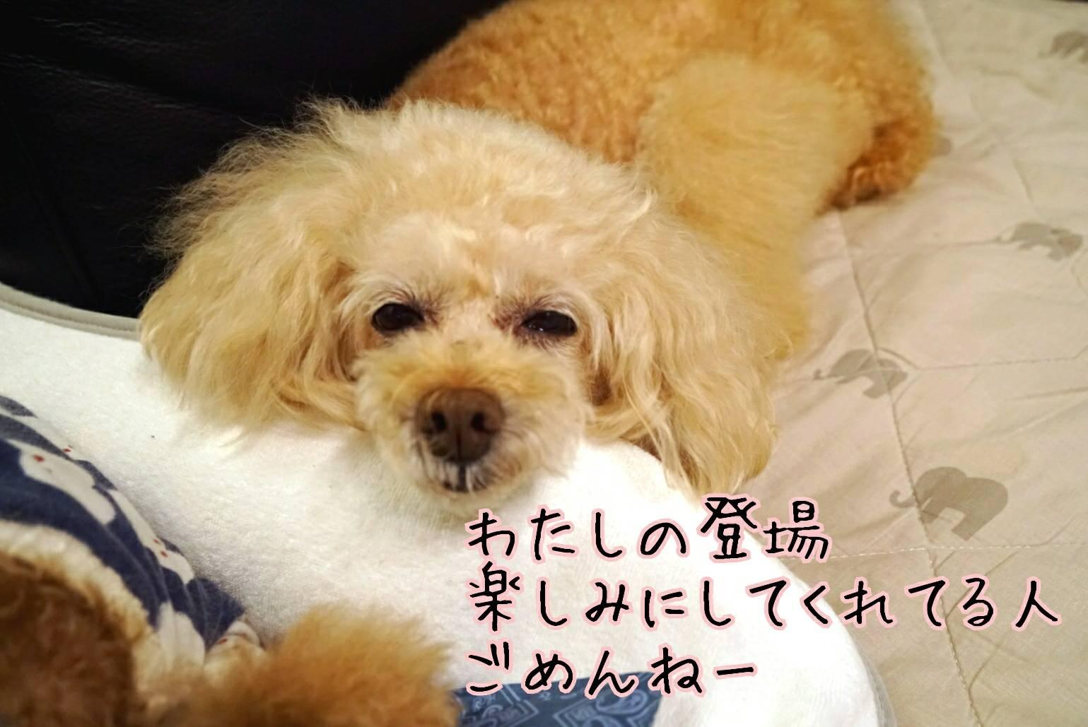 犬猫ブログ宣言13