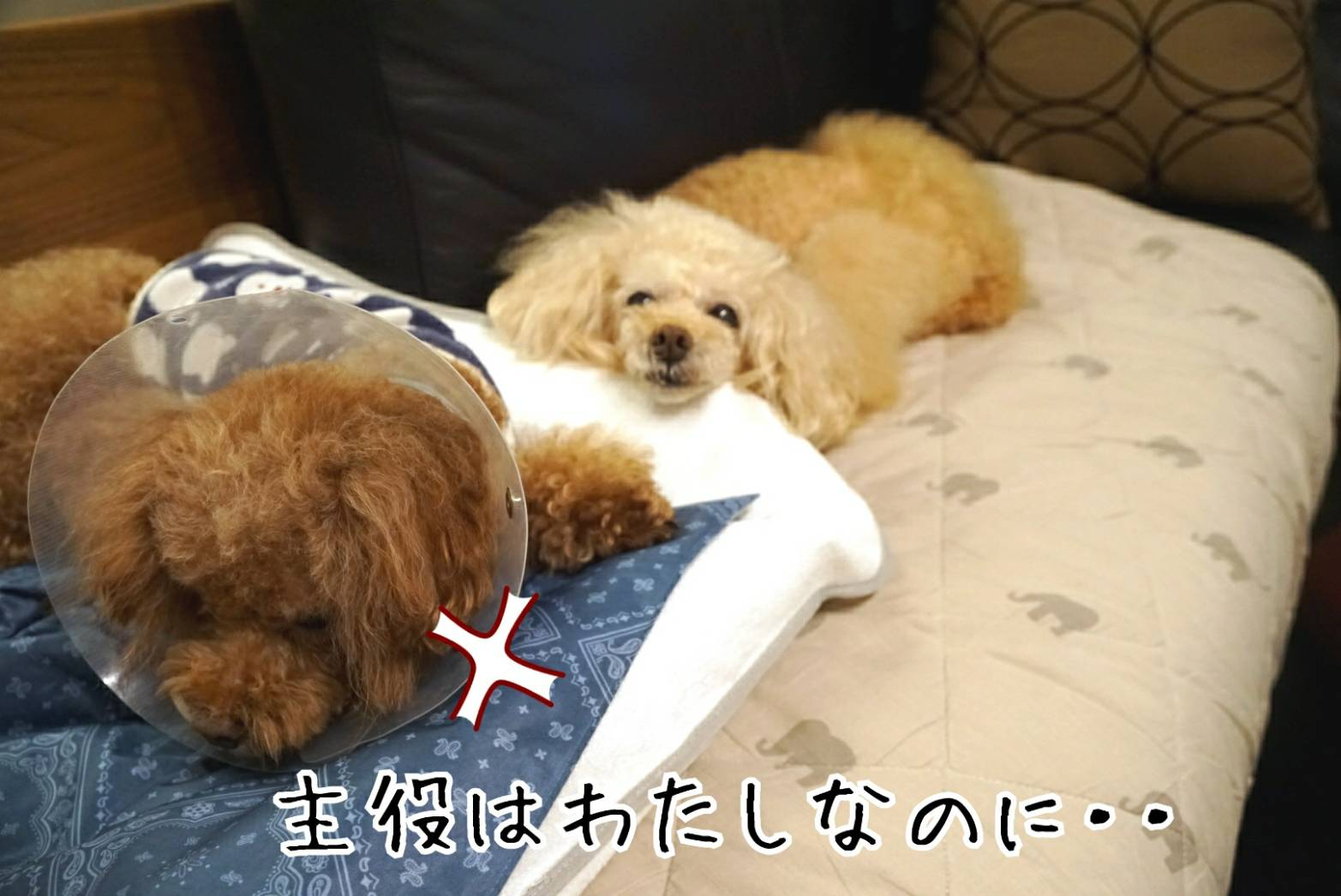 犬猫ブログ宣言14