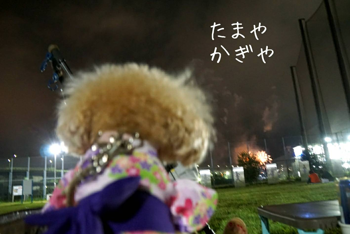 2019花火大会19