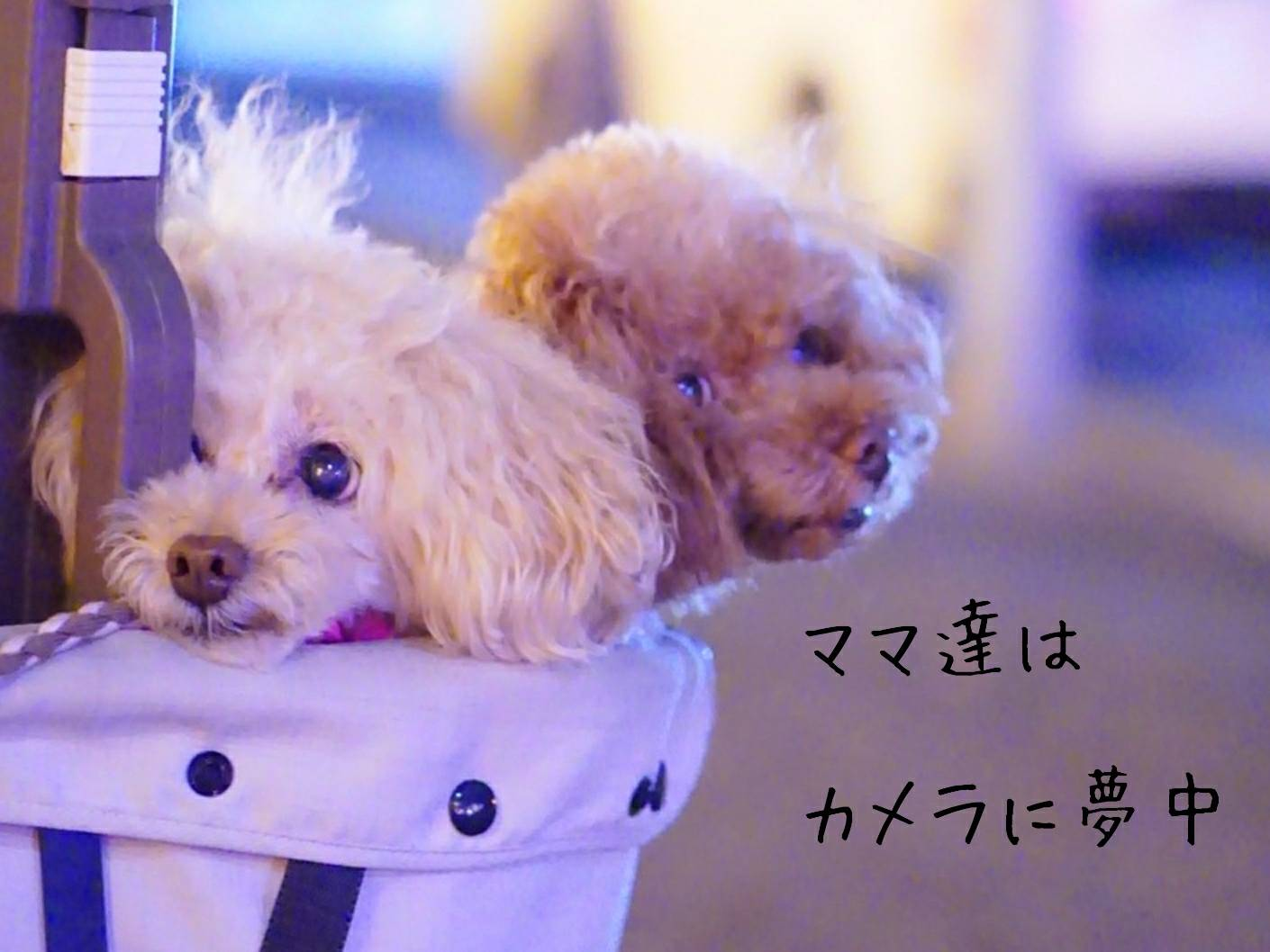 2019花火大会の帰り道13