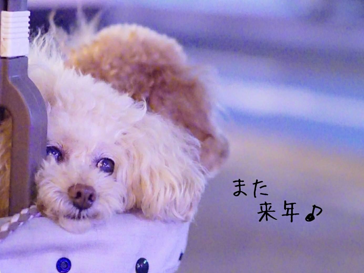 2019花火大会の帰り道17