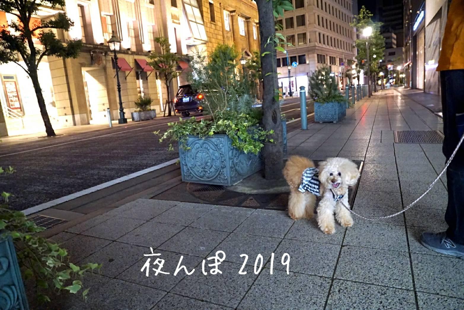 11寄るんぽ2019